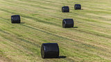 Hay bales wrapped in plastic
