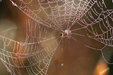 Beautiful Wide Web
