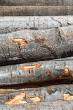 Beech wood cut logs