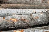 Beech wood cut logs