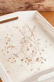 Dry coriander twigs