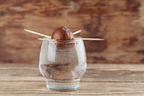 Germinating avocado