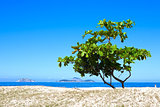 one tree on a beach