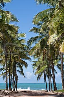 beach of maracaipe