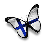 Finnish flag butterfly, isolated on white