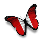 Peruvian flag butterfly, isolated on white