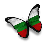 Bulgarian flag butterfly, isolated on white