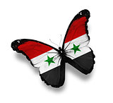 Syrian flag butterfly, isolated on white
