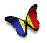 Romanian flag butterfly, isolated on white