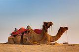 in thar desert near jaisalmer