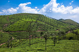 Nelliyampaty Hills Tea Fields