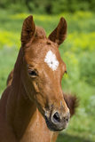 portrait of young horse