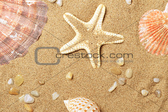 Cockleshells and a starfish lie on seacoast