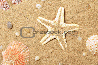 Seashells and a starfish lie on seacoast
