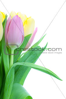Beautiful tulip bouqet