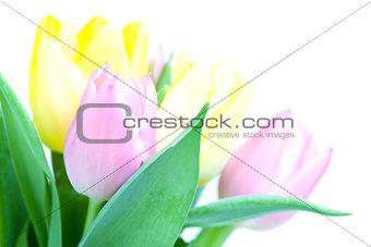 Beautiful tulip bouqet