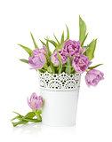 Pink tulips in metal flowerpot