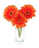 Three gerbera flowers in glass