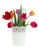 Multicolored tulips in flowerpot
