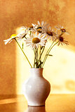 daisy flower in white vase with shallow focus