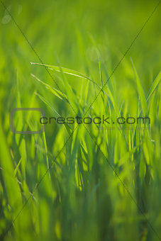 Close up of grass with water drops