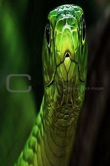 Sliver Green Snake