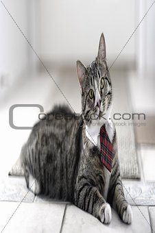 Cat on Tie