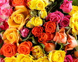 different color roses (yellow, red, pink) may be used as the background