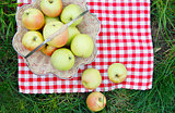 green apples in a basket on the grass