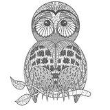 Cute owl on tree branch