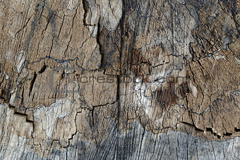 old stump texture