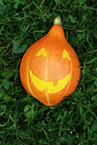 Halloween pumpkin on green grass