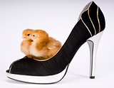 Two Baby Chicks in a High Heeled Pump Shoe