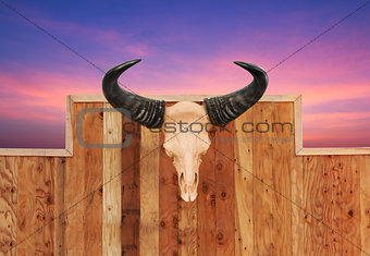 Skull cow hung on wall