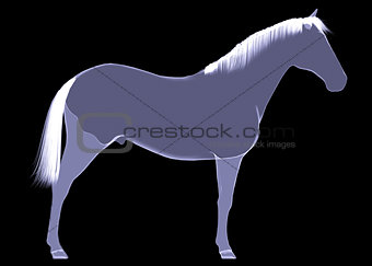 Horse. The X-ray render