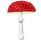 Fly-agaric with cap and leg