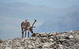 Reindeer view