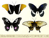 Set of realistic butterflies