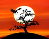 Tree Silhouette And A Bird Against Sunset