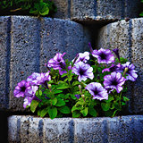 Stone Flowerbed Wall