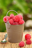 Raspberry  in a bucket