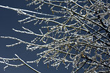 Ice-covered branches on night sky background.