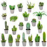 Set of indoor plants in pots - cactuses isolated on white
