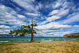 A lone pine tree at the Small Sea