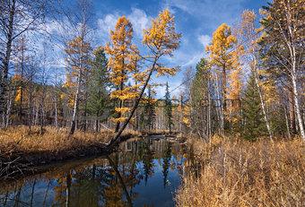 Autumn River Olha
