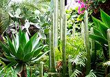 Several species of cactus