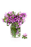 wild violet flowers in glass jar