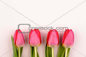 four pink tulips