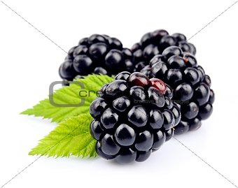 Blackberry fruit with leafs