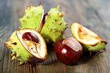 Ripe chestnuts.